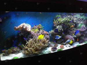 Морський акваріум у Львові